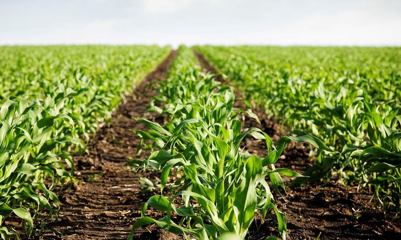 beneficios de la agricultura ecologica